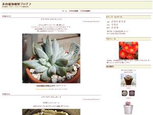 多肉植物観察ブログ♪