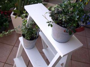 植物を置いたラダー
