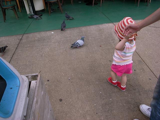 やっぱり鳩が好き