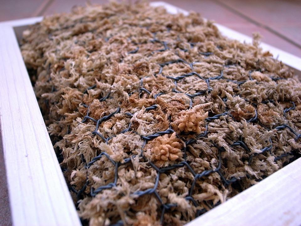 水苔とチキンネット