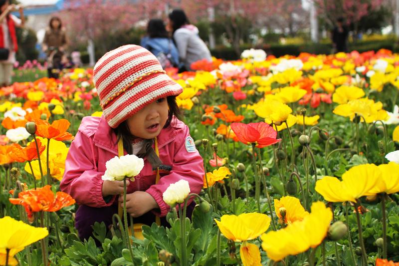 お花畑で京那