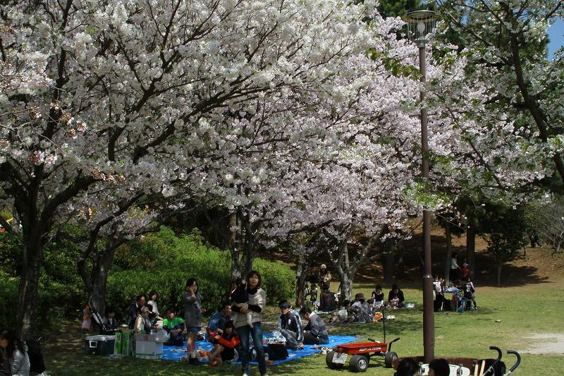 小戸公園で花見